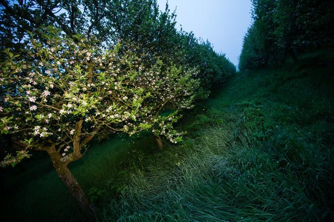 Ferme du cru de bruquedalle - Apfelblüte