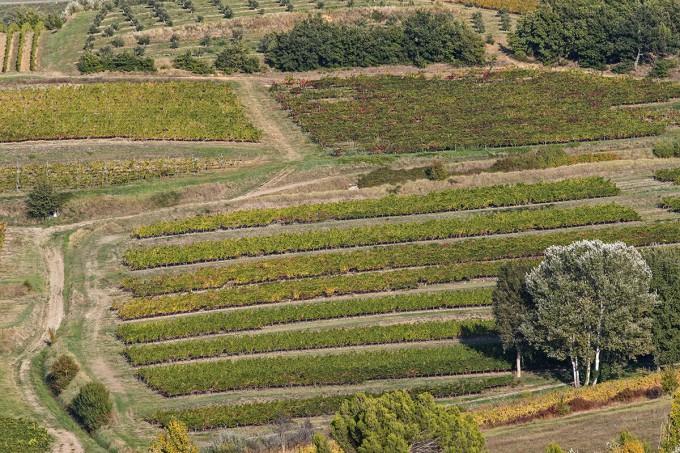 Provence, wie man sie kennt