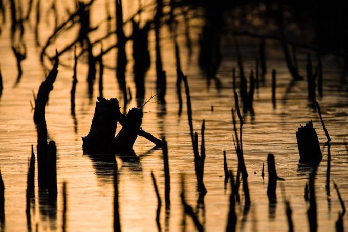 Goldenes Moor
